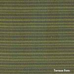 Terrace Fern